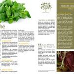 Les-legumes-hiver-mediterraneen4