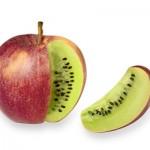 Les-aliments-transgeniques-mauvais-pour-la-thyroide