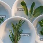 Les-herbes-fraiches