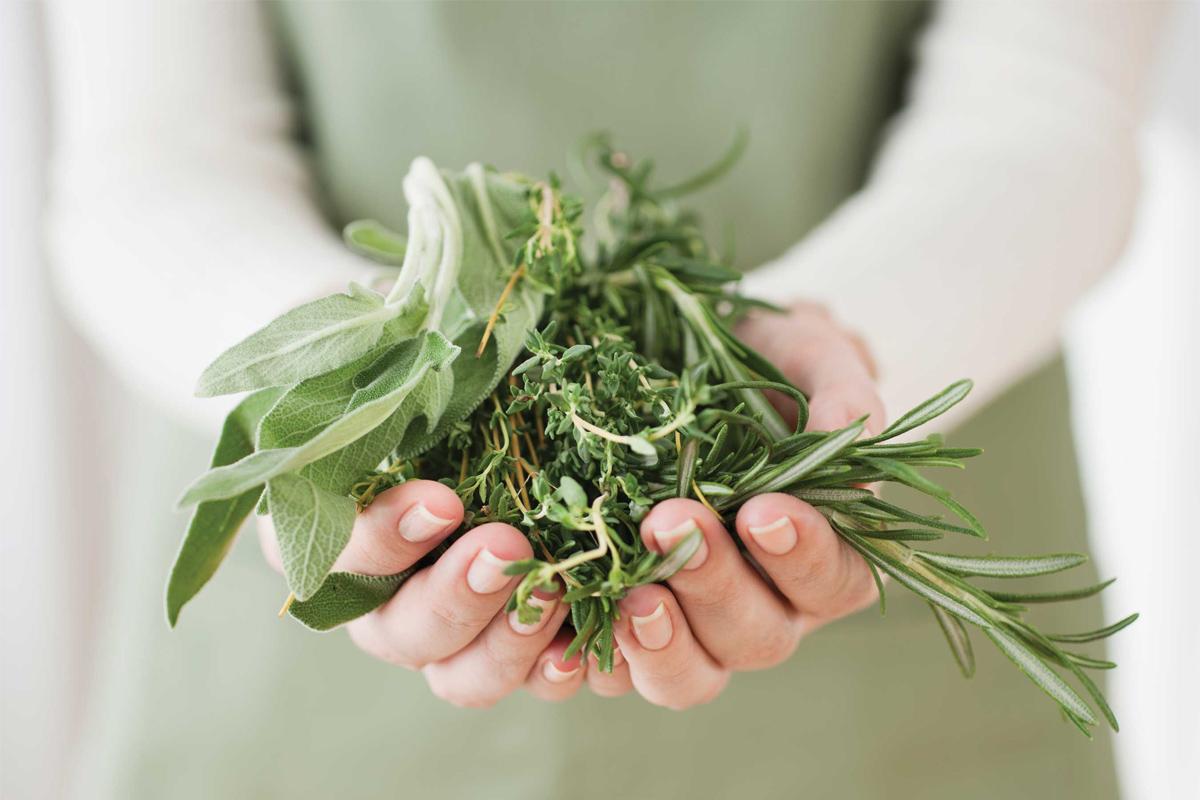 5 herbes médicinales qui vous donneront des super-pouvoirs
