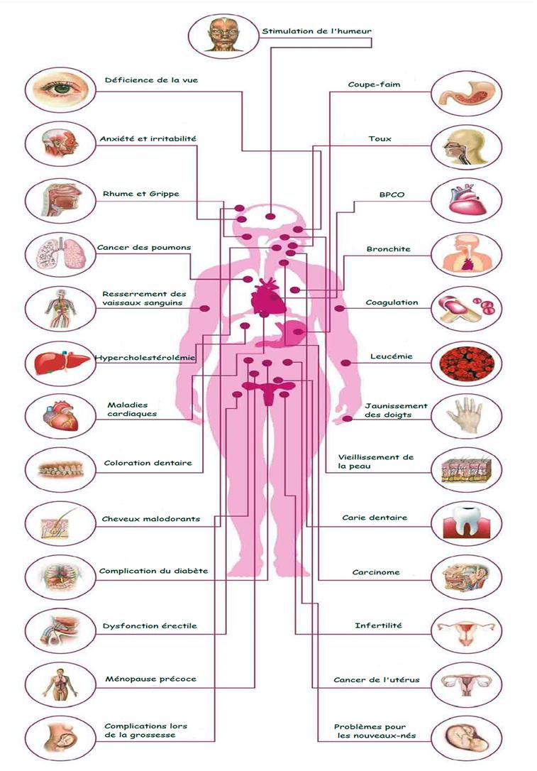 Les effets du tabac sur le corps !   Manger Méditerranéen