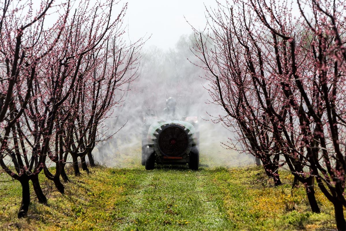 Guide de l'acheteur 2016, top 50 des aliments traités aux pesticides !