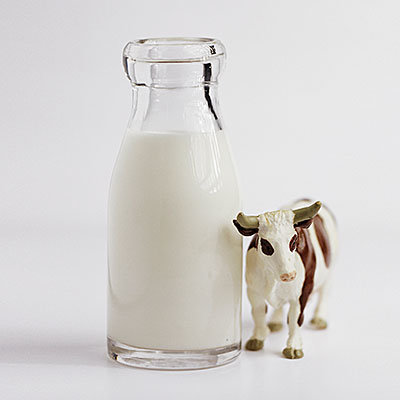 le-lait-de-vache