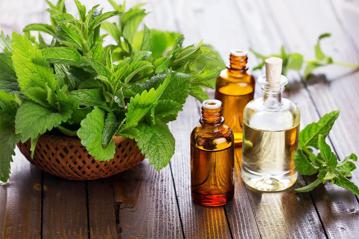 L 39 huile essentielle de menthe poivr e peut vous aider - Huile essentiel coupe faim ...