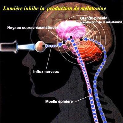 melatonine-inhibee-en-presence-de-lumiere