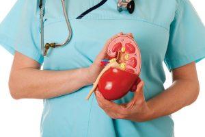Top 15 aliments pour une bonne santé rénale !