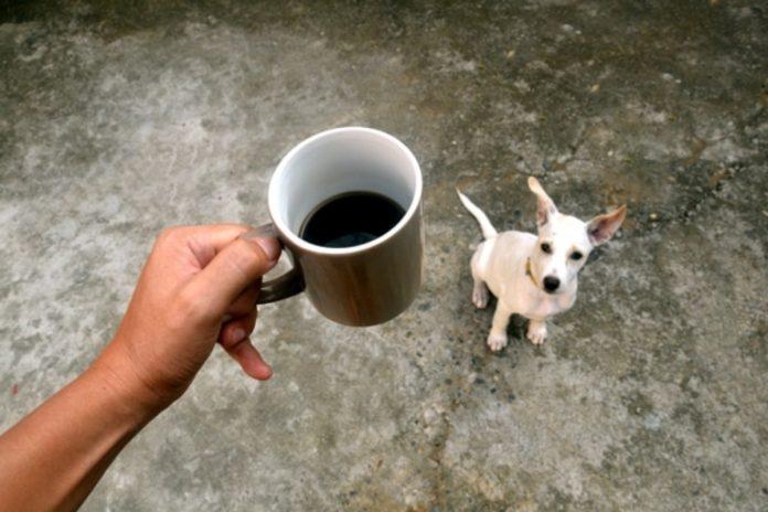 7 aliments pour hommes qui peuvent être fatals pour chiens !