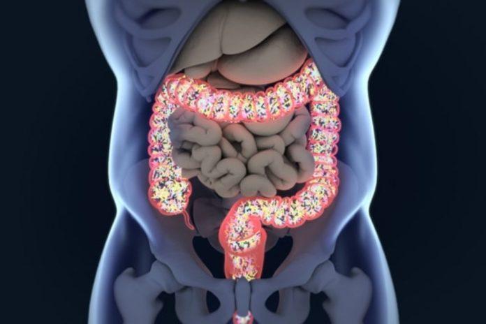 Pourquoi le Microbiote Intestinal est-il crucial pour votre santé ? et comment l'améliorer ?