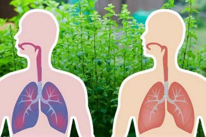 Les 5 herbes les plus puissantes pour expulser le mucus et faciliter la respiration !