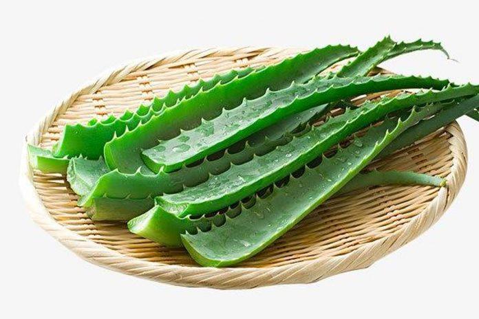 Vivre au naturel avec l'Aloe Vera : ses vertus !