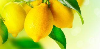 Citron, du Cachemire à la Méditerranée !
