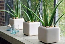 5 plantes à mettre dans sa chambre pour un meilleur sommeil !
