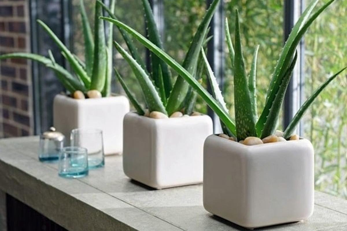 5 plantes mettre dans sa chambre pour un meilleur sommeil manger m diterran en. Black Bedroom Furniture Sets. Home Design Ideas