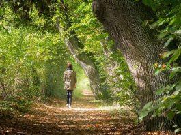 L'appel de la forêt : les arbres vous veulent du bien !