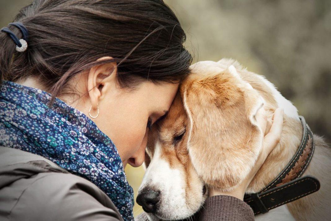 Avoir un chien, c'est bon pour la santé !
