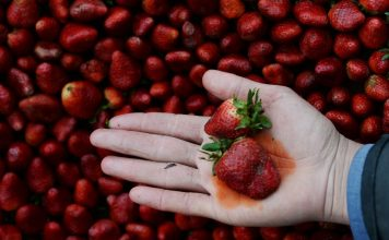 Comment réduire les pesticides de vos fruits et légumes ?