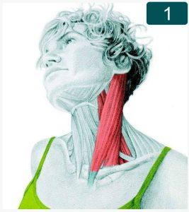 Flexion latérale du cou