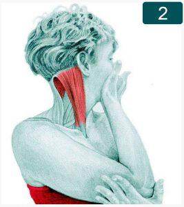 Etirement de la rotation du cou