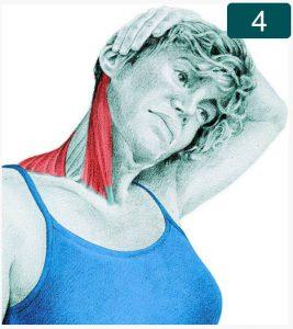 Flexion latérale du cou avec une assistance par la main