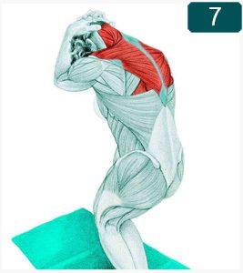 Étirement du Muscle trapèze