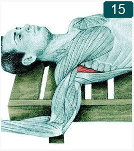 Étirement en rotation externe de l'épaule