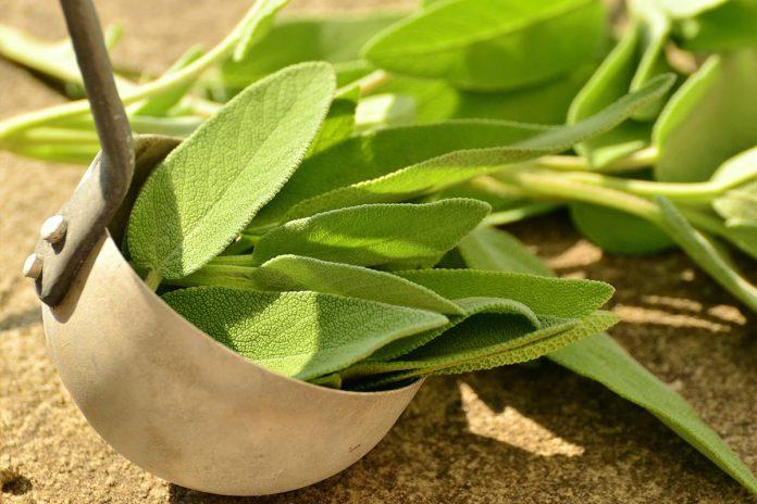 Herbes médicinales : Des plantes qui guérissent !