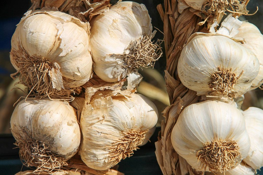 Une solution savoureuse : L'ail et ses effets sur l'hypertension artérielle !