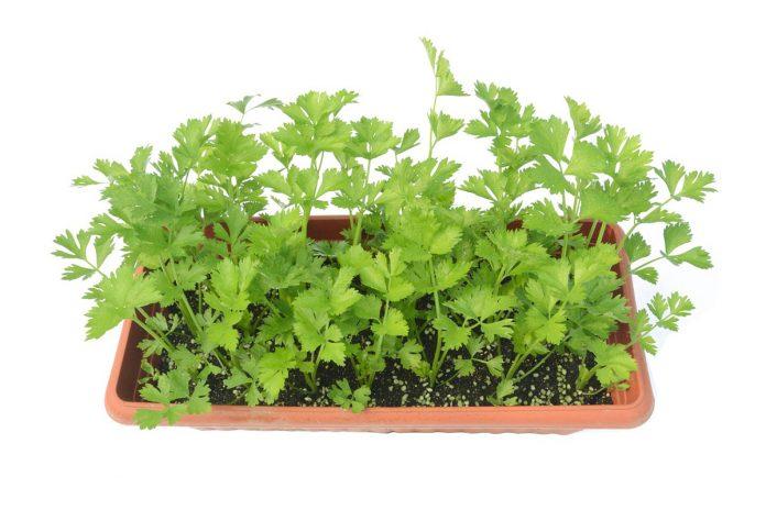 Légumes et herbes aromatiques que vous pouvez faire repousser simplement en utilisant des restes de cuisine !