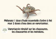 Faites votre propre insectifuge naturel avec cette recette simple !
