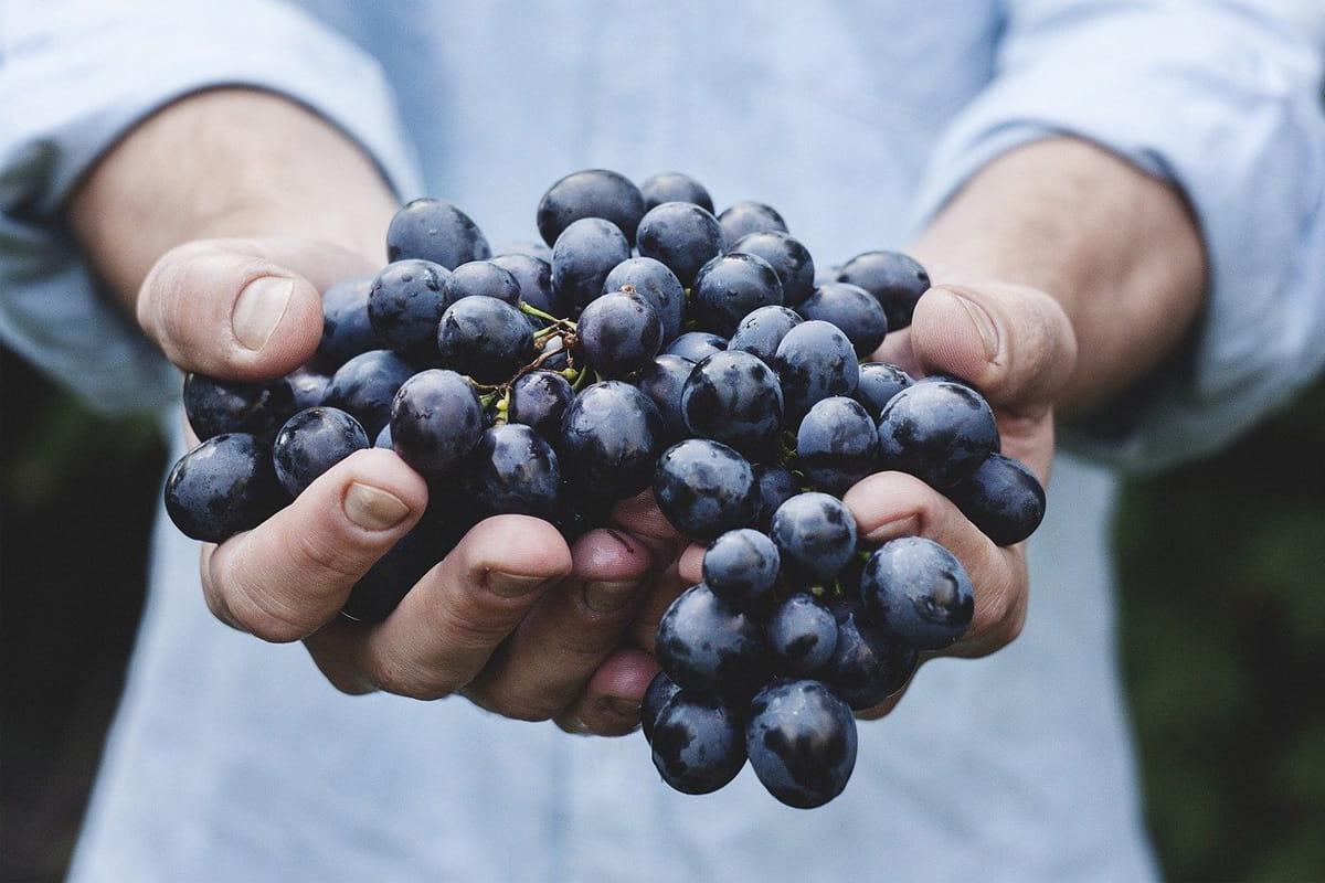 7 aliments anti-inflammatoires !