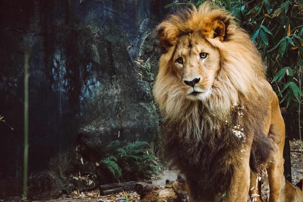 L'homme a tué 83 % des mammifères sauvages et 50 % des plantes !