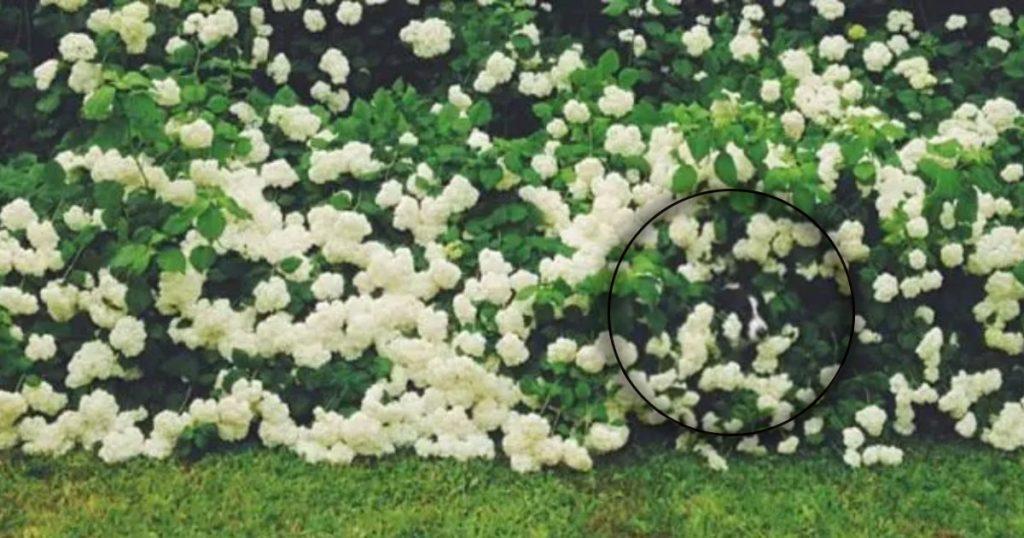 chien trouvé - buisson de fleurs